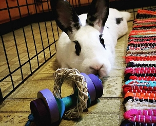 Fun Bun's Rabbit Roller - Toy for Bunny Rabbits, Guinea Pigs and Chinchillas