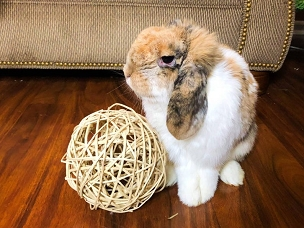 6 inch Natural Twig Ball - Fun for Bunny Rabbits, Guinea Pigs and Chinchillas